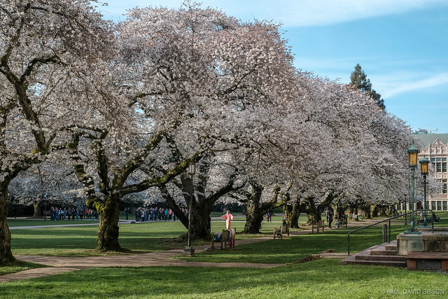 Spring is in bloom | Seattle, WA | March 2018
