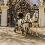 Fiaker in Schlosspark Schönbrunn