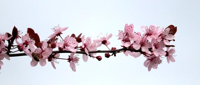 Spring IV