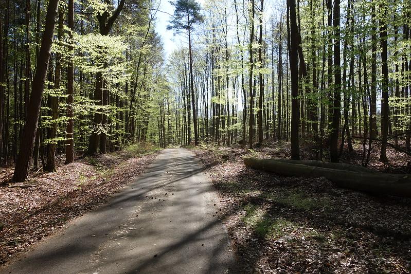Der Wald zwischen Wittstock und Rheinsberg