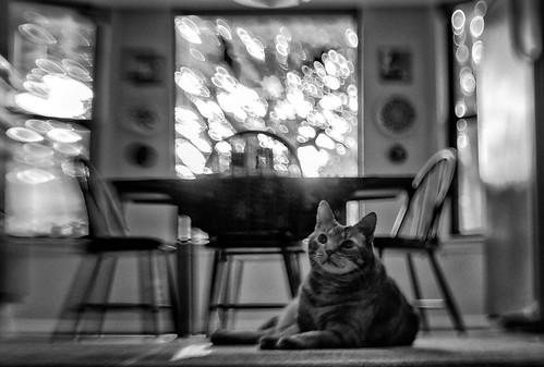 Lensbaby Kitty