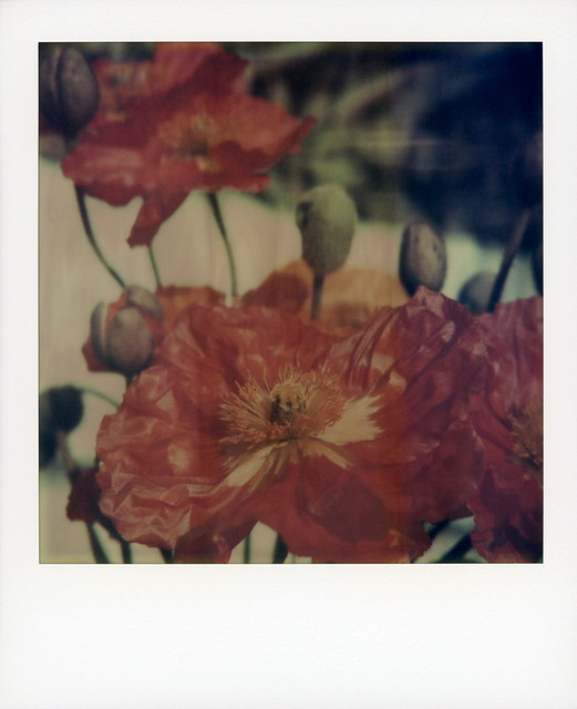 Fade To Poppies