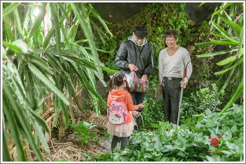 火龍果園星光野餐之找地瓜 烤地瓜 吃地瓜 (29)