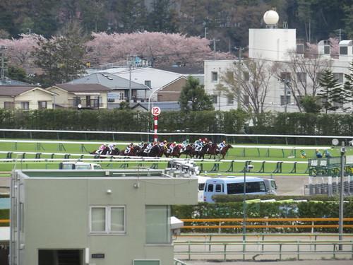 福島競馬場のダート1150mの芝部分