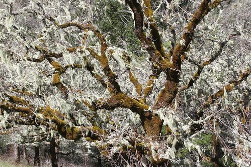north bank habitat management area oregon hiking cascades foothills roseburg glide whistlers bend umpqua river