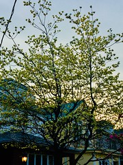 Spring in Brooklyn, New York