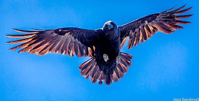 The Crow. 01. Fuerteventura, abril 2018.