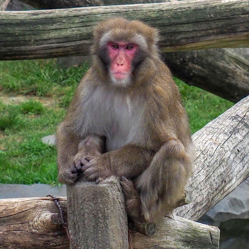 動物園サル/160mm相当を拡大