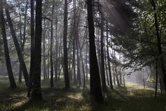 Forest Skylight