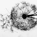 Wire Dandelion