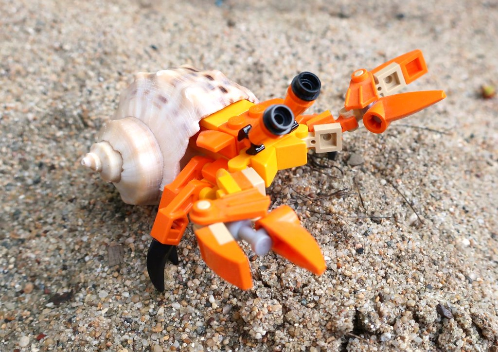 a lego hermit crab wearing a real shell