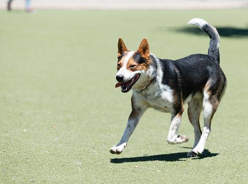 dog_park_20180530_350