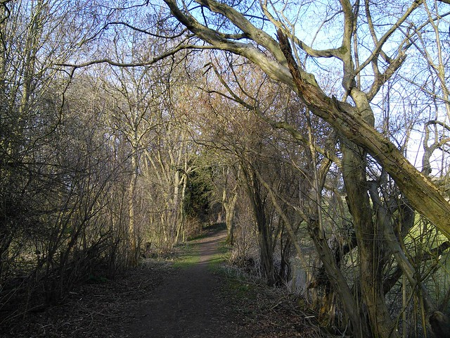 Old hedge near the nature reserve, Tewin