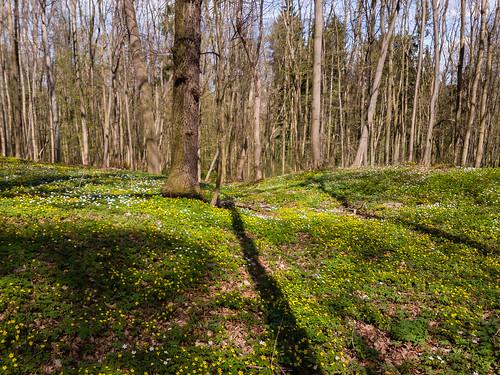 Endlich Frühling in Thüringen bei Weimar