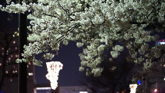 DSC07725みなとみらい夜景散歩