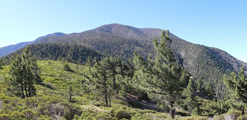 Looking up at San Bernardino Peak from Manzanita Flat