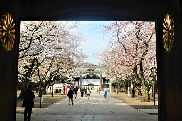 yasukuni-sakura