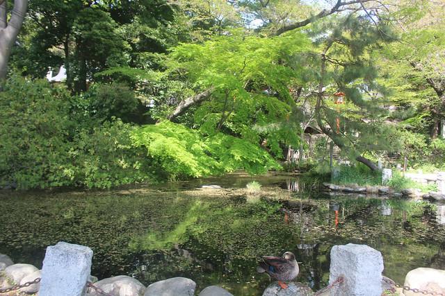 haijimahiyoshi-gosyuin04054