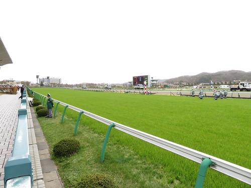 福島競馬場の芝直線