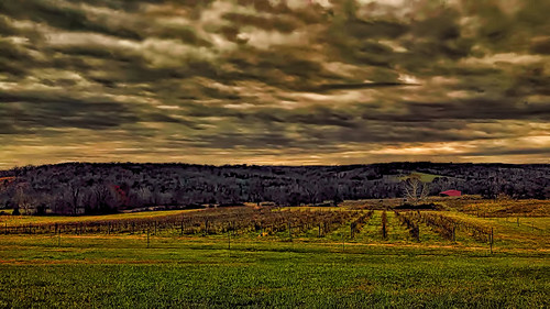 vineyard ozarks missouri