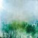 Winter green by Jerzy Durczak