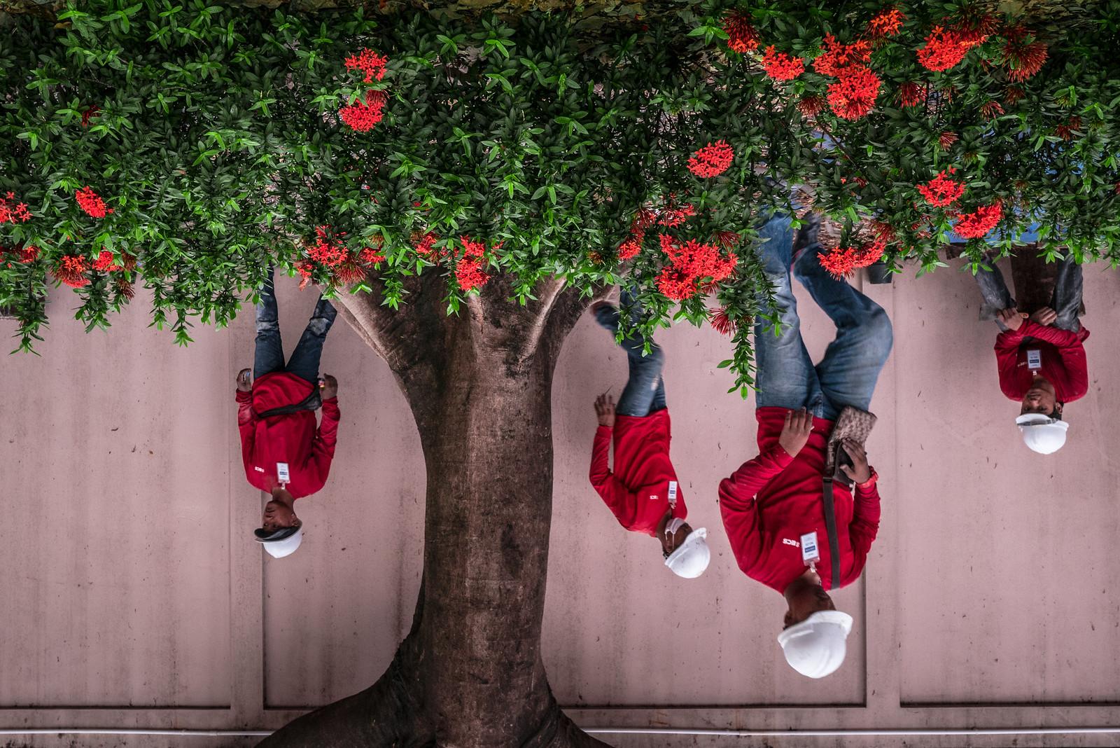 Tree Peeps