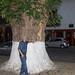 Árbol centenario, humano sexagenario (casi) por Brujo+