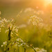 Sunset Bokeh by Mirrored-Images