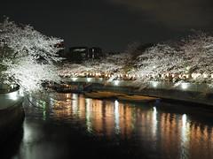 Cherry blossoms (sakura) at Oyokogawa,  Kurofunebashi bridge, monzen nakacho