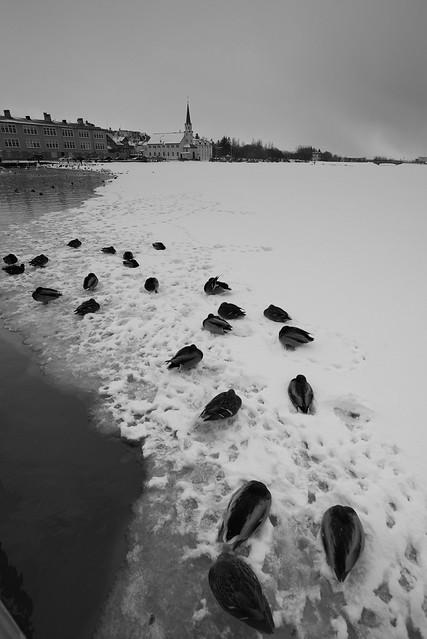 Hljómskálagarður, Reykjavík, February 2018