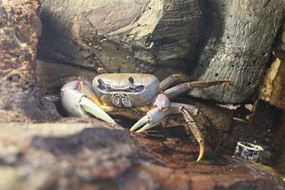 Warsaw Zoo - Crab