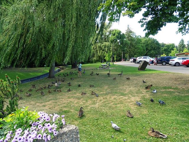 Polson Park (60)