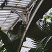 The Palm House-3