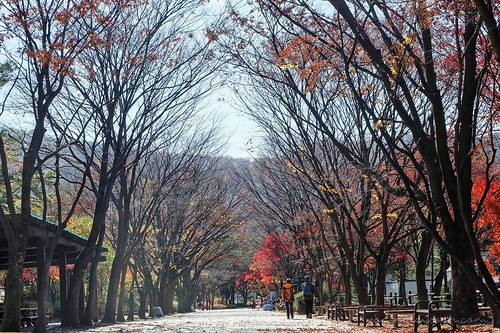 autumn_trees_seoul_grand_park | by Sammdaysoon