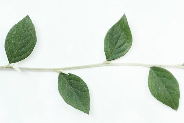 Natural line symmetry