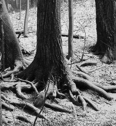 素描树根步骤图