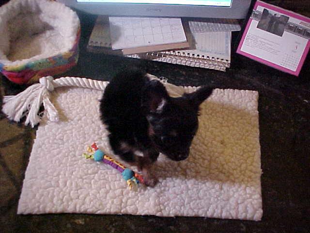 Puppy Itzl at Play
