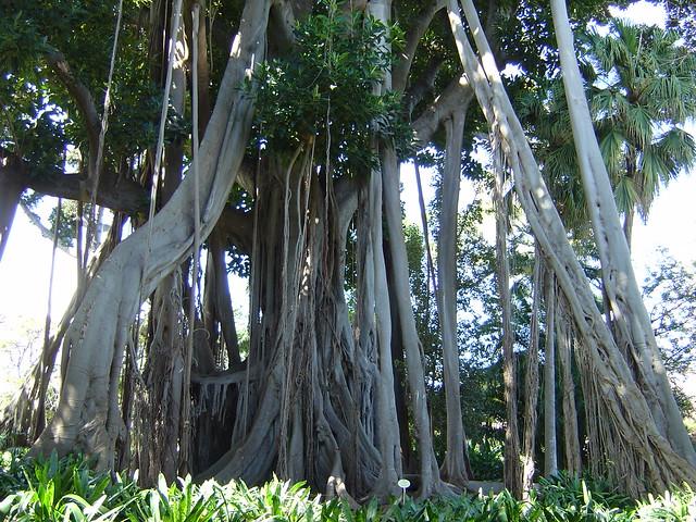 Bezienswaardigheden tenerife top 10 tip for Botanische tuin tenerife