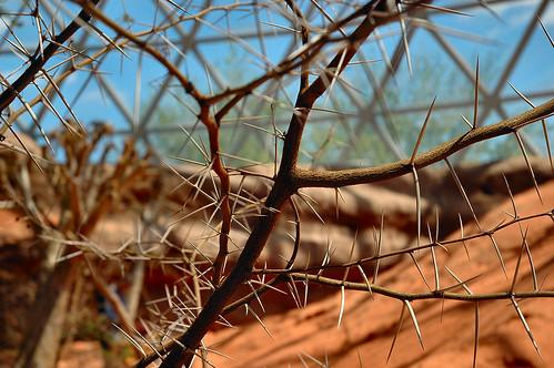 omaha nebraska zoo desert dome desertdome bush plant thorn spike thorns spikes thorny spiky prickly sharp geotagged geolat41225638 geolon95927875