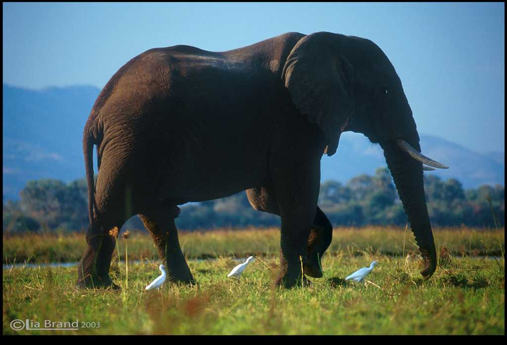 The Biggest Animal In The World On Land