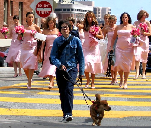 the bridesmaids and the dog
