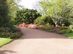 shrub, flower, garden, grass, property, driveway, yard, landscaping, landscape,
