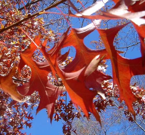 DSC02652 - autumn leaves