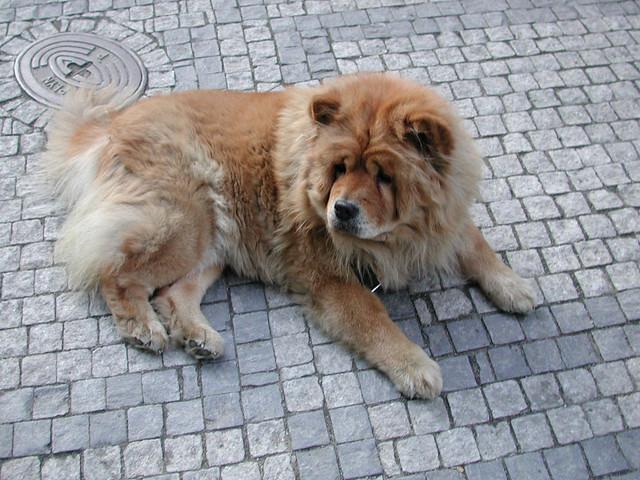Half Dog Half Lion Medium (640 � 480)