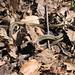 RIT Snakes