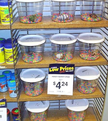 Walmart sells pets still flickr photo sharing for Betta fish food walmart