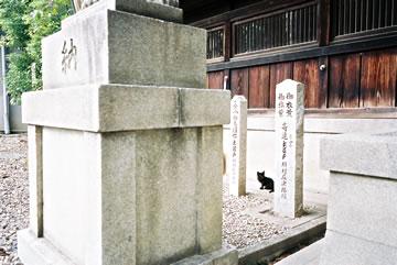 神社の黒猫