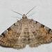 Noctuidae I - 8322-8489