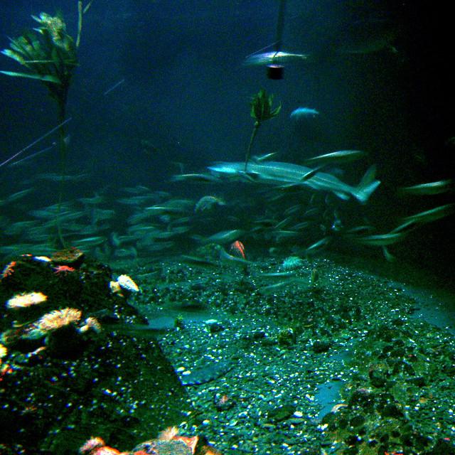 1574 Vancouver Aquarium Flickr Photo Sharing