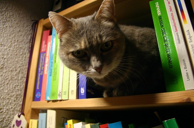Shelf the cat IV